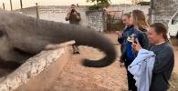 Девушка пыталась снять слона, но животному это, видимо, не понравилось.