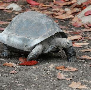 Черепаха. Архивное фото