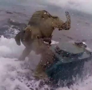 Американская береговая охрана опубликовала видео спецоперации задержания самодельной субмарины с наркоторговцами.