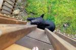 В штате Теннесси (США) мужчина снял на видео попытку нападения на него медведя.
