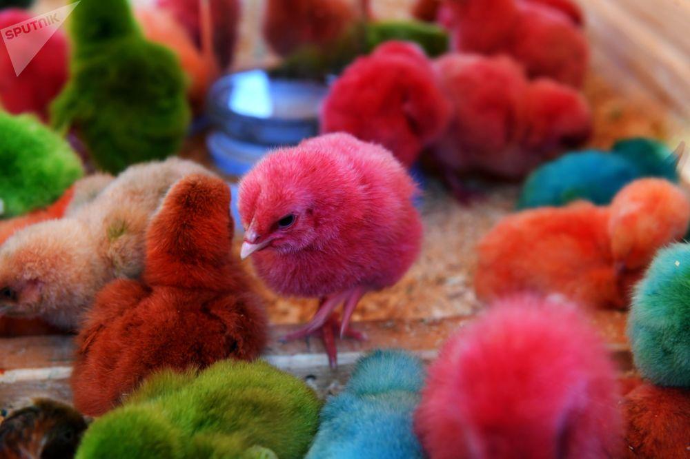 Крашеные цыплята на IV всероссийском фестиале Скорлупино в селе Пестрицы Пестричинского района Республики Татарстан.