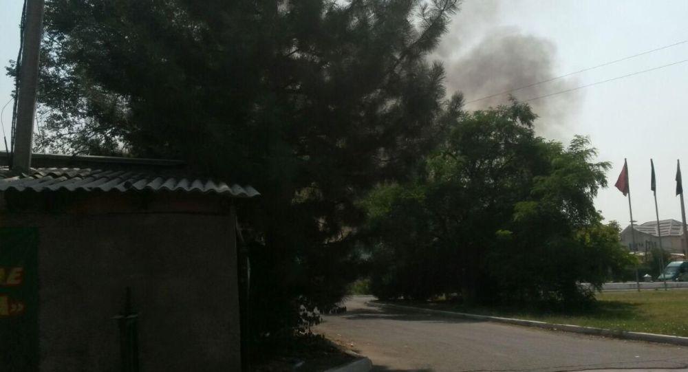 Администрация Ботанического сада имени Энвера Гареева в Бишкеке специально сжигает траву, чтобы избежать крупных возгораний