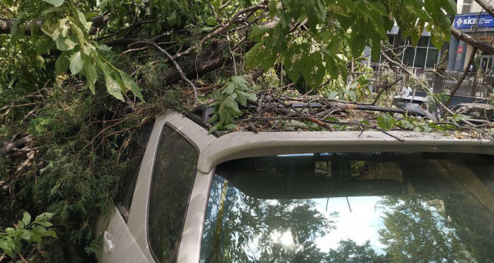 Сотрудники Бишкекзеленхоза на проспекте Эркиндик убирает ветки, которые упали на автомобиль Toyota Harrier