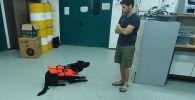 С помощью пульта можно с легкостью выдрессировать собаку, утверждают разработчики изобретения.