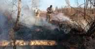 Пожарные МЧС тушат торфяной пожар. Архивное фото
