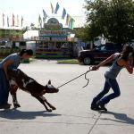 Девушки ведут теленка на сельскохозяйственную ярмарку в американском штате Айова