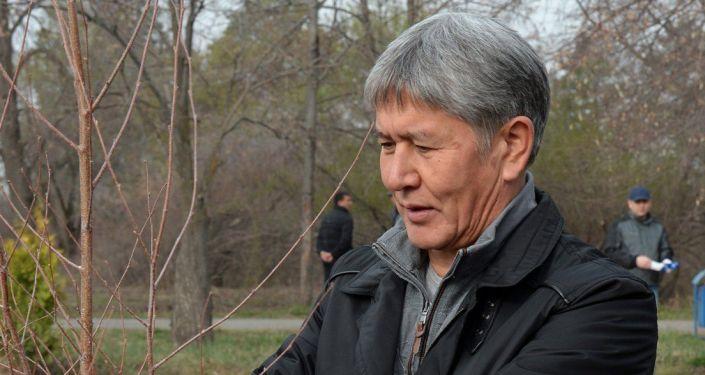 Архивное фото  бывшего президента Кыргызской Республики Алмазбека Атамбаева