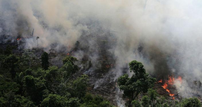 Амазониядагы токойдо чыккан өрт. Архивдик сүрөт