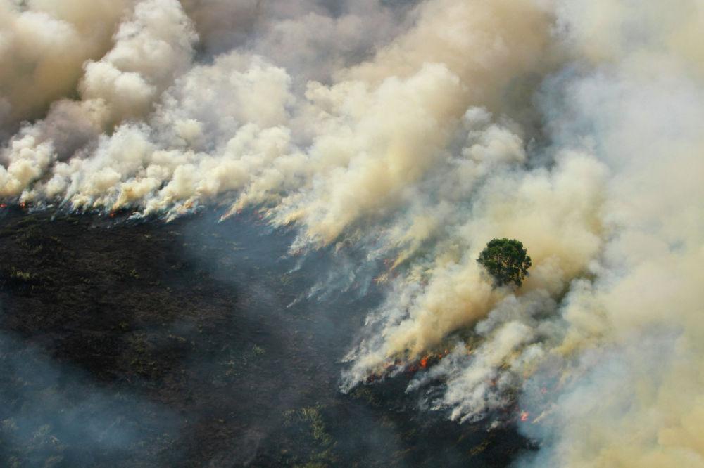 Лесной пожар в провинции Южный Калимантан, Индонезия