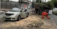 Сотрудники МП Бишкекзеленхоз убирают последствия падения тополя на машину марки Mazda на пересечении улиц Боконбаева и Турусбекова.