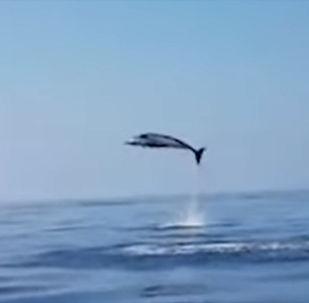 Тордон чыккан дельфиндин баласы суудан ары-бери секирип, балыкчылардын маанайын көтөргөн.