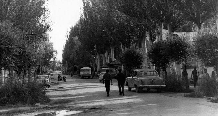 Тополя в городе Каракол. Архивное фото