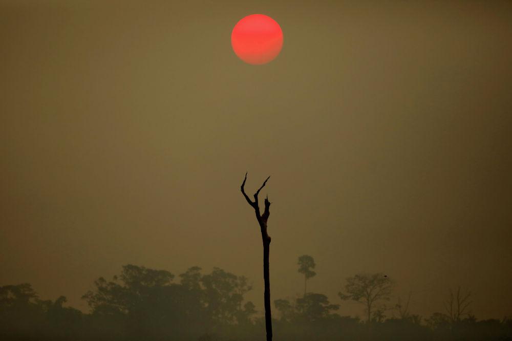 Национальный лес Бом Футуро в Бразилии