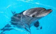 Дельфин. Архивное фото