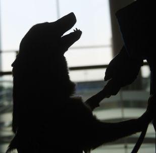 Силуэт собаки. Архивное фото