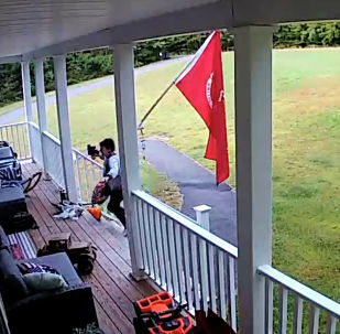Жительница города Ноттингтема (штат Нью-Гэмпшир) столкнулась с медведем в собственном дворе. Видео с камеры наблюдения опубликовано в YouTube.