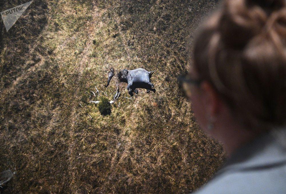 Посетительница выставки работ победителей V Международного конкурса фотожурналистики имени Андрея Стенина у снимка Распил Джастина Салливана (ЮАР), признанного лучшей одиночной фотографией по мнению интернет-пользователей