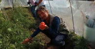 У школы в селе Бакайыр есть участок в два гектара и теплица. Там выращивают овощи для школьной столовой. Благодаря этому учащиеся младших классов получают сбалансированное питание.