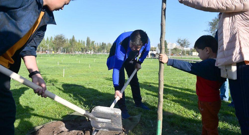Премьер-министр Мухаммедкалый Абылгазиев үй-бүлөсү менен Бишкек шаарынын түштүгүндө жайгашкан Ынтымак паркынын аймагына бир нече көчөт отургузду.