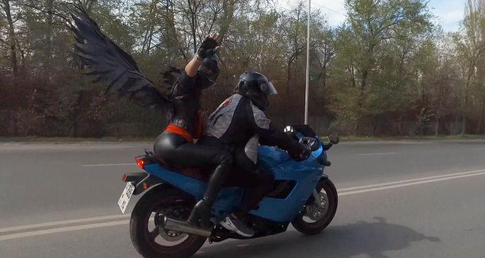 Примерно 300 байкеров на разных мотоциклах и мопедах проехались по Бишкеку в честь закрытия мотосезона 2019 года.