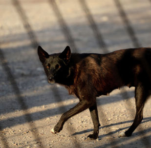 Бездомная собака на улице. Архивное фото