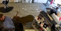 В американском графстве Саффолк штата Нью-Йорк олень ворвался в салон красоты, разбив стеклянную стену.