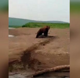 В Сети появилось видео чудесного спасения нерпы, которая попалась в лапы голодному медведю.