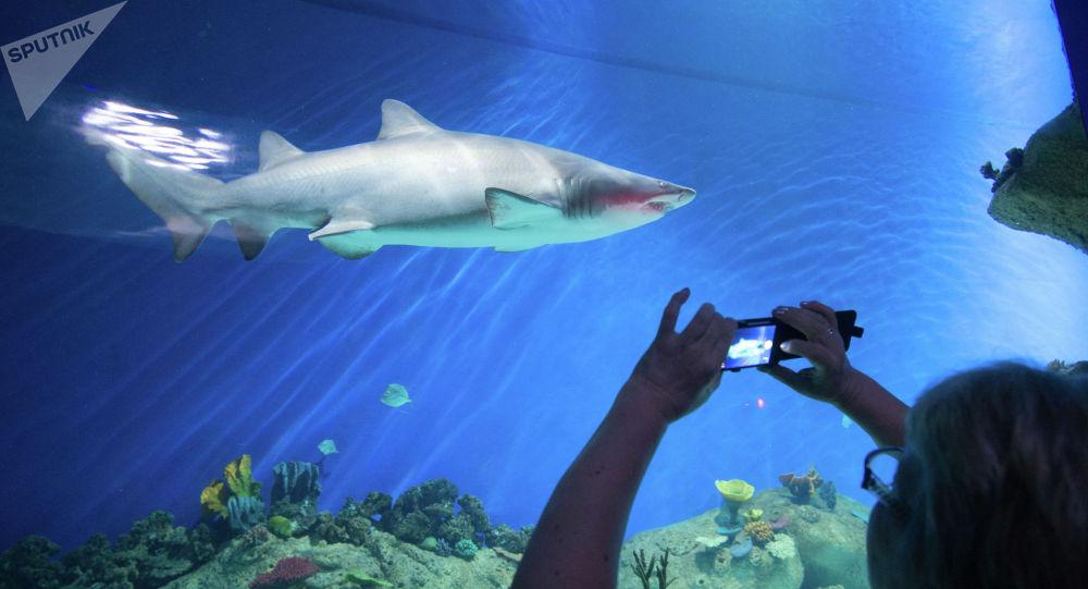 Акула в океанариуме. Архивное фото