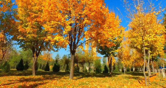 Мы запустили дрон над Южными воротами (парк Победы имени Д. Асанова) в Бишкеке, чтобы вы могли увидеть потрясающий осенний пейзаж с высоты.