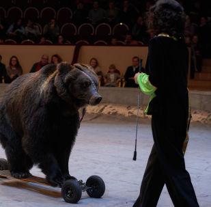 Циркачи выступают с медведем. Архивное фото
