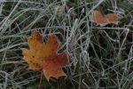Замершие листья. Архивное фото