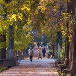 Бишкектеги коңур күз