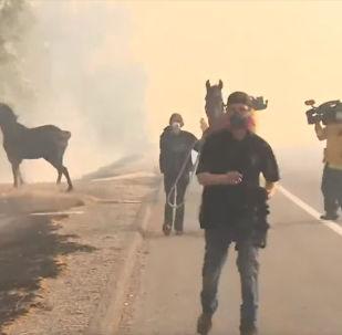 В Калифорнии во время бушующего лесного пожара спасенный жеребец побежал снова в гущу дыма, чтобы помочь выбраться семье.