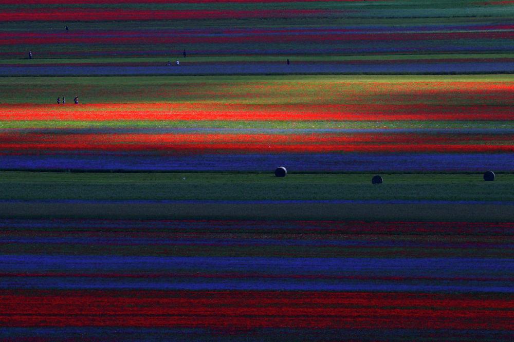 Цветочные поля в Кастеллуччо, Италия