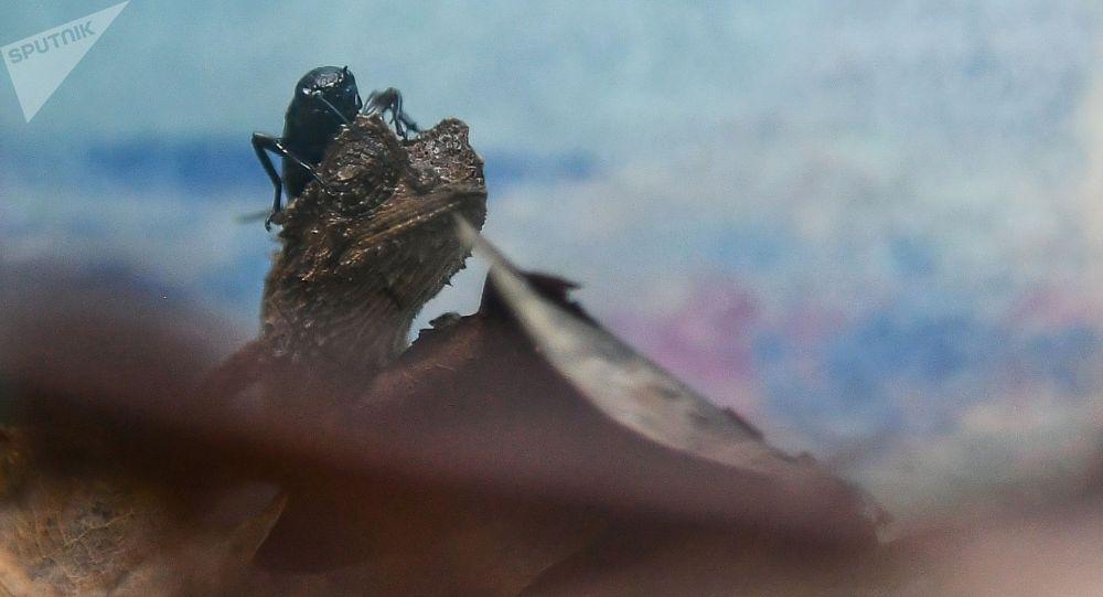 Рептилия. Архивное фото