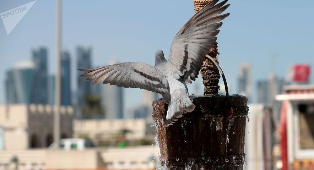 Голубь на ведре с водой. Архивное фото