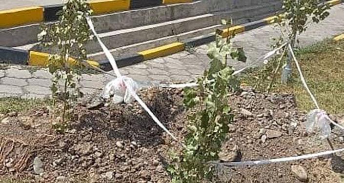 За прошедшую рабочую неделю санитарно-экологическая инспекция (СЭИ) мэрии Бишкека составила девять протоколов по Кодексу о нарушениях КР в связи с фактами игнорирования правил благоустройства столицы