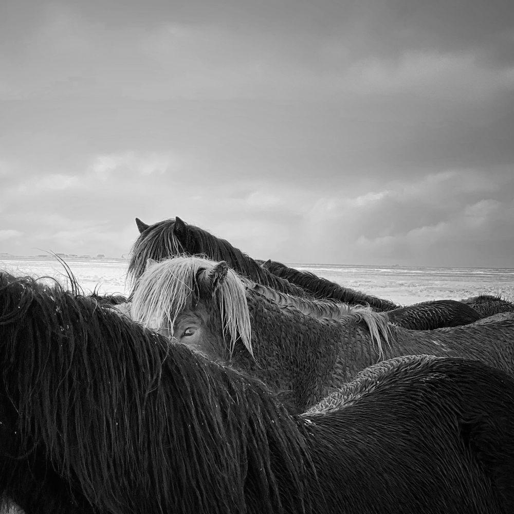 Лошади во время шторма