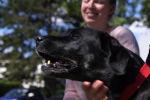 Специалисты Ганноверского университета ветеринарной медицины (Германия) пришли к выводу, что обученные собаки в подавляющем большинстве случаев способны распознавать образцы, взятые у зараженных вирусом пациентов.