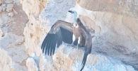 История птенца стала первой в мире успешной попыткой выкормить оставшуюся без матери крупную хищную птицу с помощью мультикоптера.