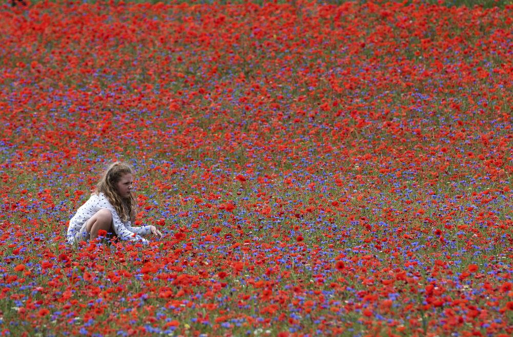 Девушка в поле цветущих цветов мака возле Кастеллуччо, небольшой деревни в центральной части региона Умбрия, Италия