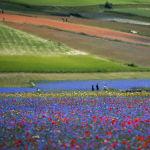 Люди на цветочных полях в итальянском регионе Умбрия