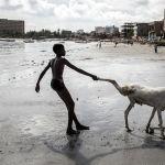Юноша тащит овцу к морю в преддверии мусульманского праздника Курбан байрам в Дакаре.
