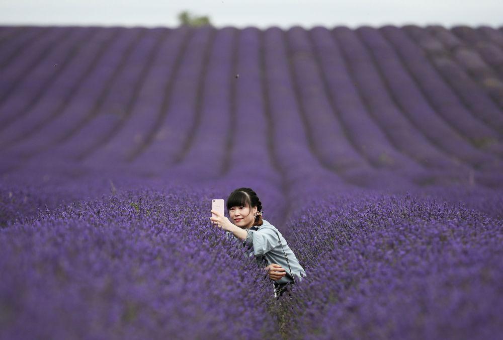 Девушка делает селфи на лавандовой ферме Hitchin Lavender в Иклфорде Великобритания, 4 августа 2020 г