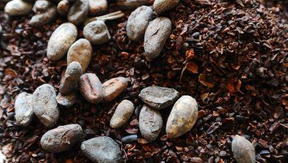 Какао бобы и какао-крупа. Архивное фото