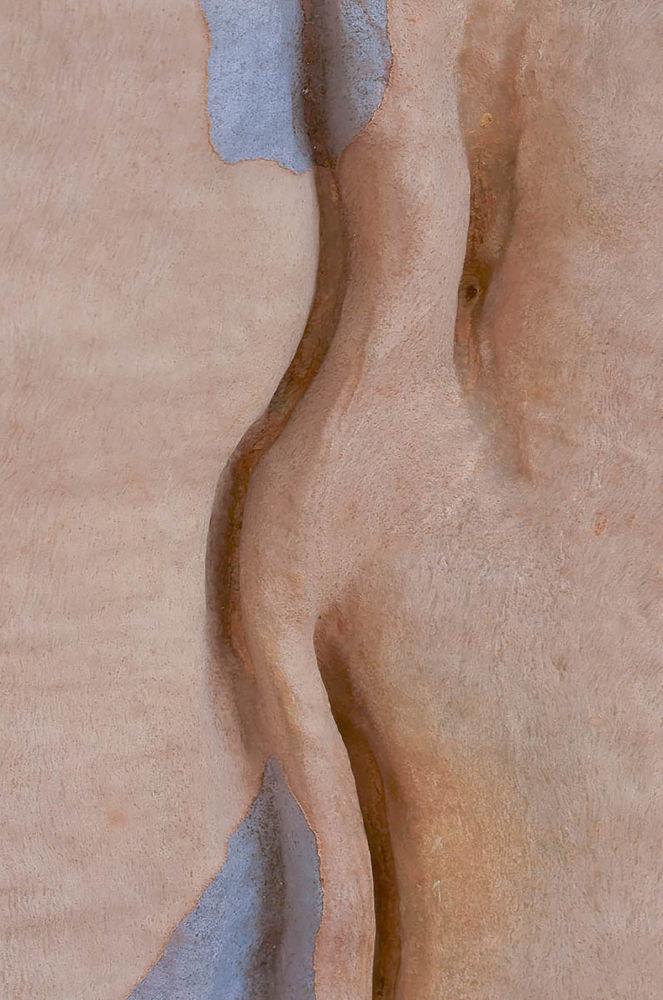 Петер Пулландын оригиналдуу эмгеги калыстарды таң калтырды. Сүрөттө жөнөкөй эле эвкалипт.