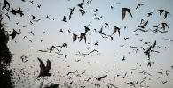 Летучие мыши. Архивное фото