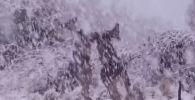 Причиной такого редкого для Австралии природного явления — снегопада — стали антарктические холодные массы. Местами толщина сугробов достигала одного метра.