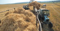 Заготовка соломы на поле. Архивное фото