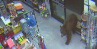 В одном из районов штата Калифорния бурые медведи начали совершать налеты на круглосуточные магазины в поисках пищи.